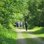 A walk through the leafy glades of Bourlon Wood 2010